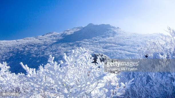 Snow Covered Bare Trees Against Mountain
