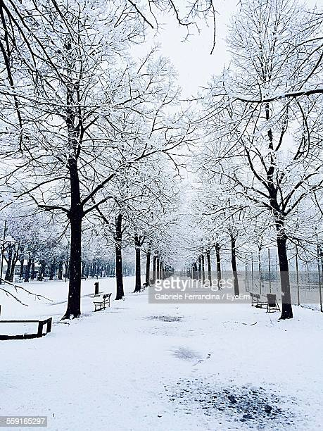 Snow Covered Bare Trees And Street