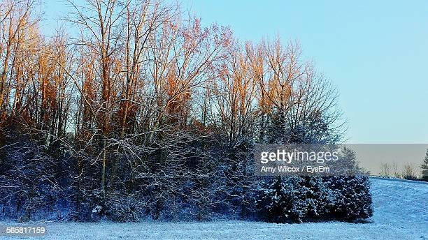 snow covered bare trees in field - amy freeze stock pictures, royalty-free photos & images