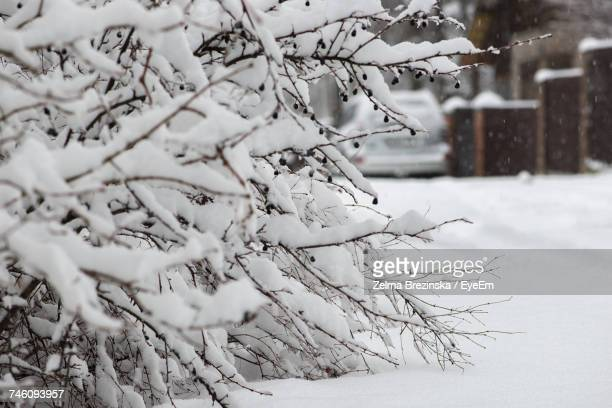 snow covered bare trees on field - brezinska stock pictures, royalty-free photos & images