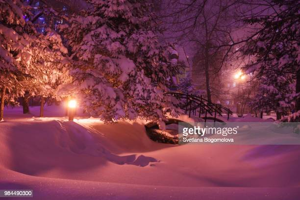 snow covered bridges in the park - spruce tree stock pictures, royalty-free photos & images