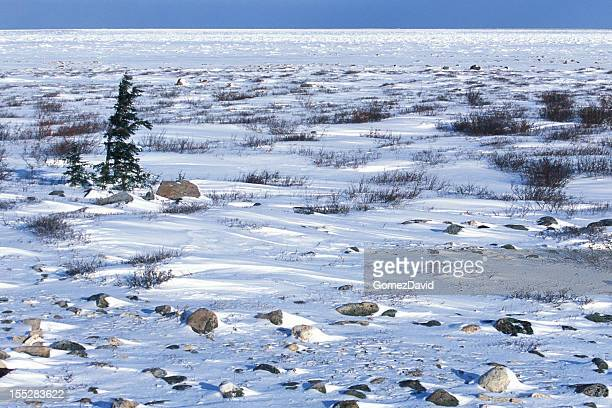 Snow Covered Canadian Tundra