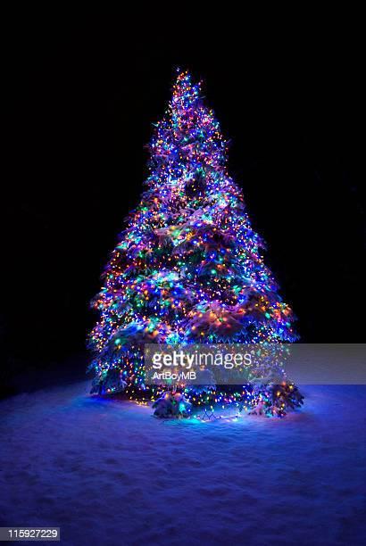 Snow covered christmas tree
