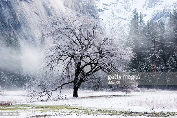 snow covered elm tree in mountain valley - elm tree stock pictures, royalty-free photos & images