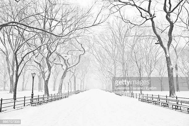 snow covered empty road amidst bare trees - snow stock pictures, royalty-free photos & images
