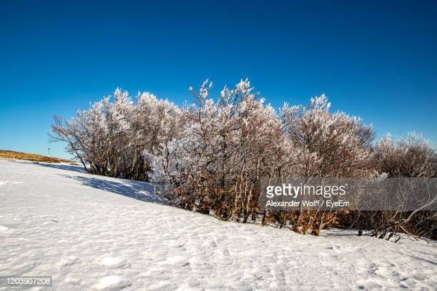 snow covered field against clear blue sky - lorraine smothers stock pictures, royalty-free photos & images