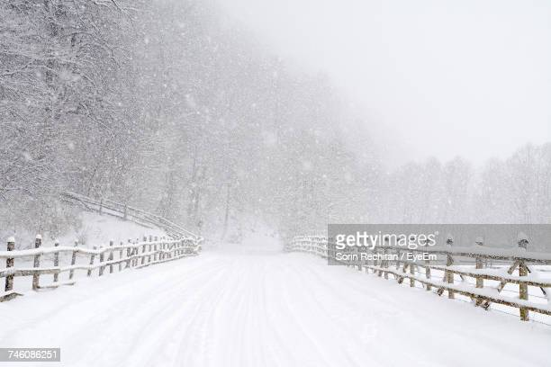 Snow Covered Footpath Against Trees During Snowfall
