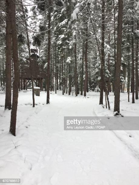 Snow covered footpath passing through forest