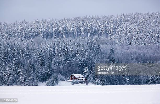 Snow covered forest and house in winter