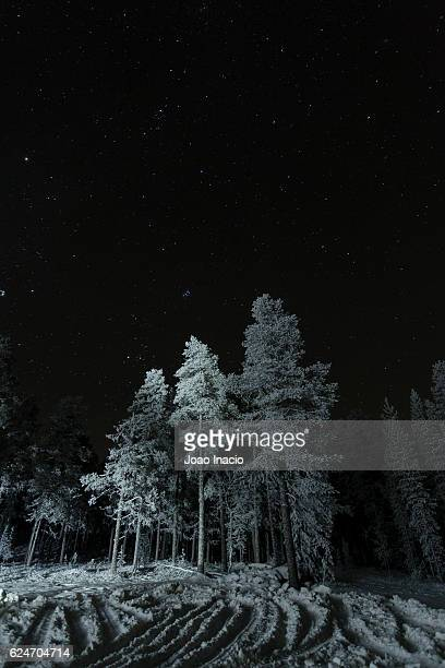 Snow covered forest at night, Pallas-Yllästunturi National Park, Finland