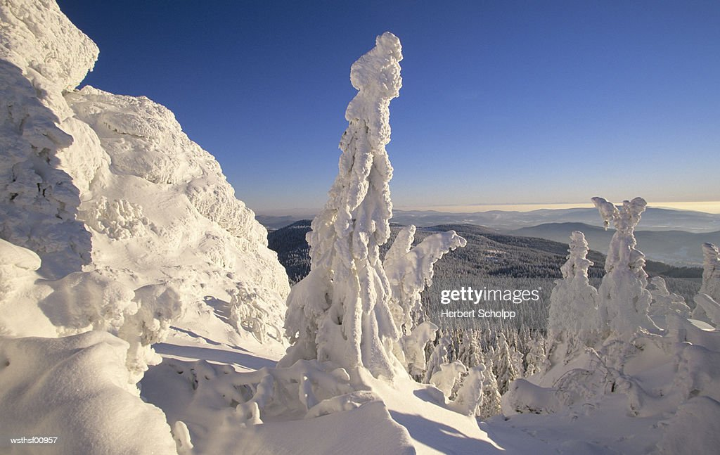 Snow covered forest, Grosser Arber, Bavarian Forest, Germany : Foto de stock