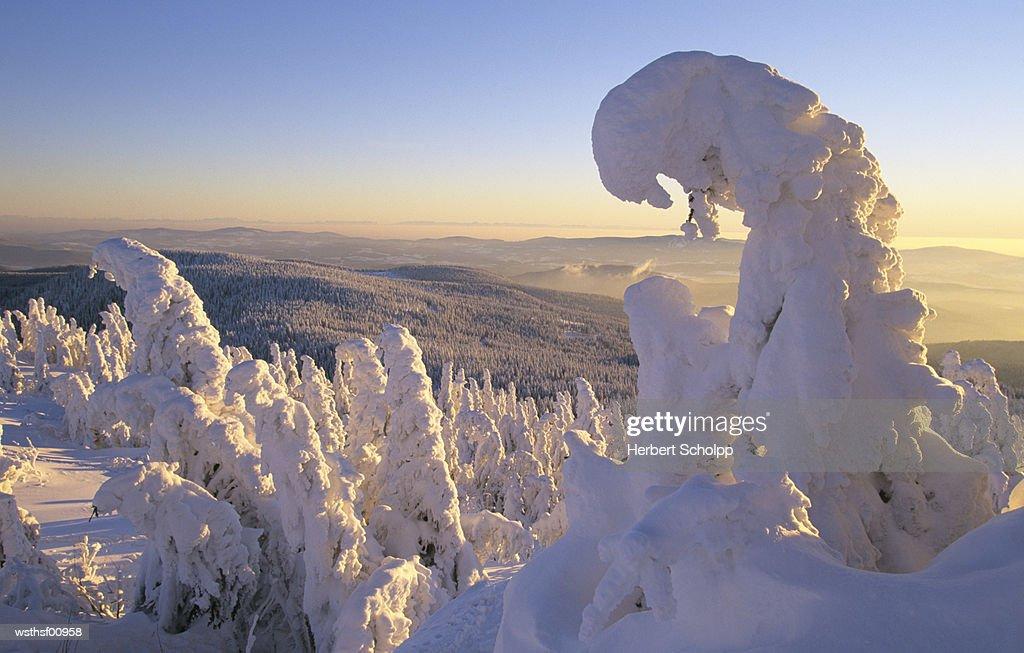 Snow covered forest, Grosser Arber, Bavarian Forest, Germany : Stock Photo
