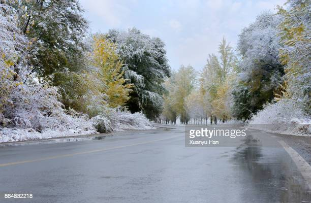 snow covered forest highway - wet stock pictures, royalty-free photos & images