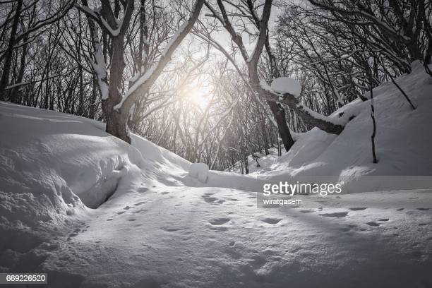 Snow covered forest in Hachimantai, Ontario, Canada