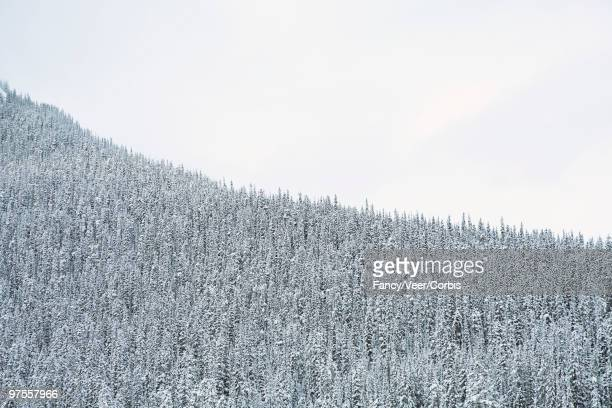 snow covered forest - climat stock pictures, royalty-free photos & images