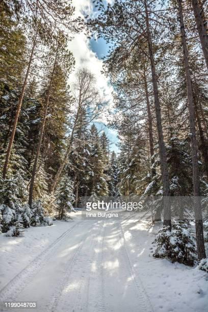 snow covered forest road - コーカサス山脈 ストックフォトと画像