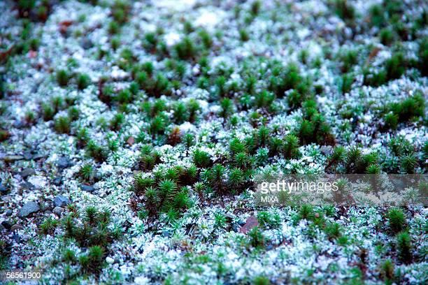 snow covered garden, close-up - wabi sabi - fotografias e filmes do acervo