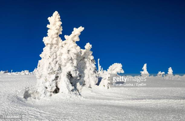 snow covered land against clear blue sky - babia góra mountain stock pictures, royalty-free photos & images