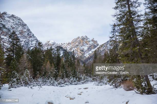 snow covered land and trees against sky - massimo cavallari stock pictures, royalty-free photos & images