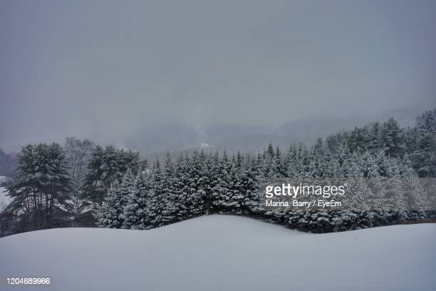 snow covered land and trees against sky - barry wood stock pictures, royalty-free photos & images