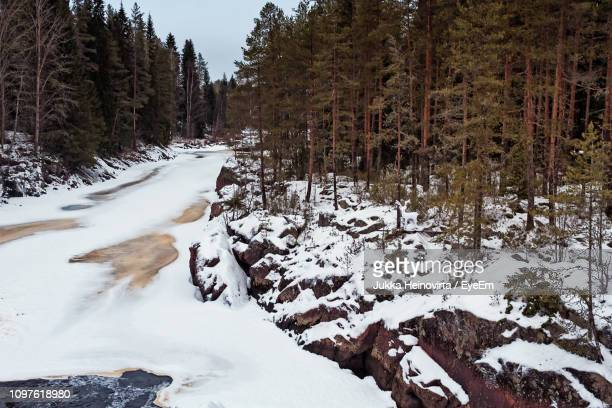 snow covered land and trees in forest - heinovirta stock photos and pictures