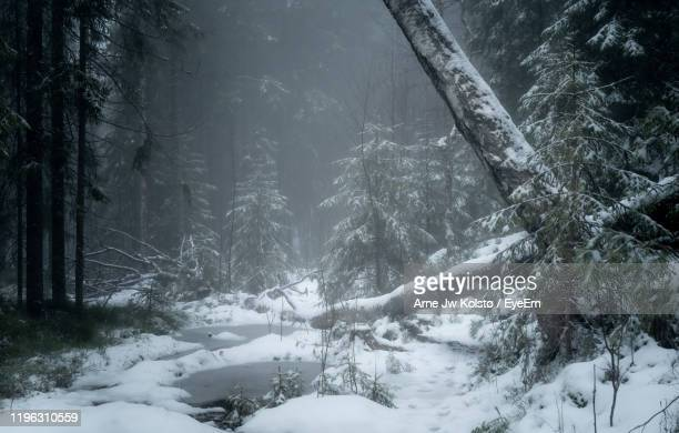 snow covered land and trees in forest - arne jw kolstø stock pictures, royalty-free photos & images