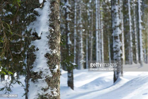 snow covered land and trees in forest - drazen stock pictures, royalty-free photos & images