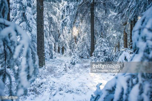 snow covered land and trees in forest - val thoermer stock-fotos und bilder