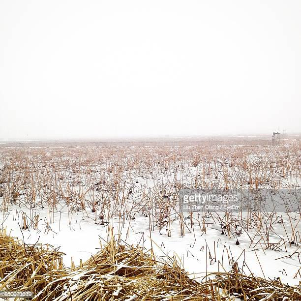 snow covered landscape against clear sky - liu he stock pictures, royalty-free photos & images
