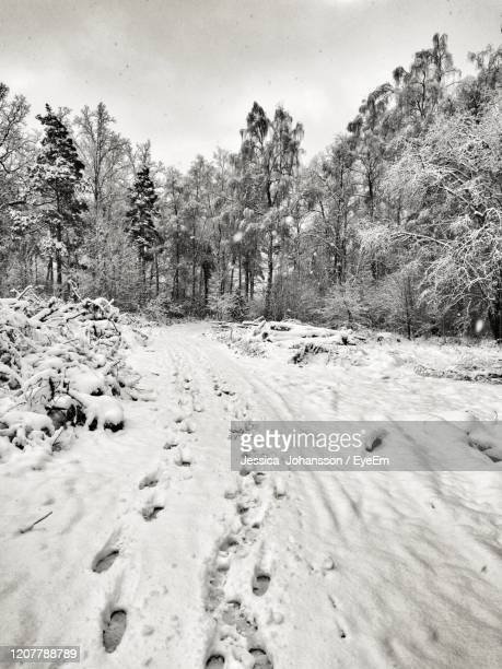 snow covered landscape against sky - vaxjo stock pictures, royalty-free photos & images