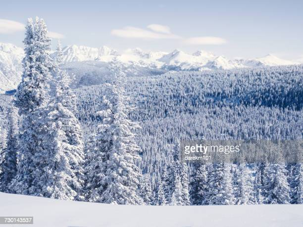 snow covered landscape and evergreens, vail, colorado, america, usa - steamboat springs colorado - fotografias e filmes do acervo