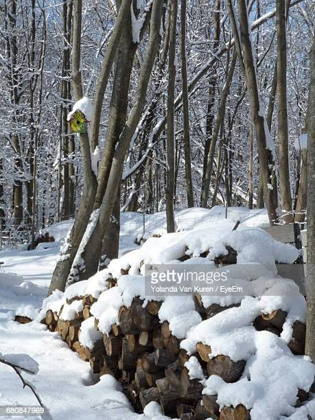 Snow Covered Logs Amidst Bare Trees On Field