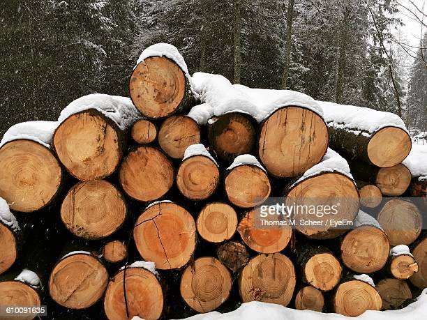 Snow Covered Logs On Field Against Trees