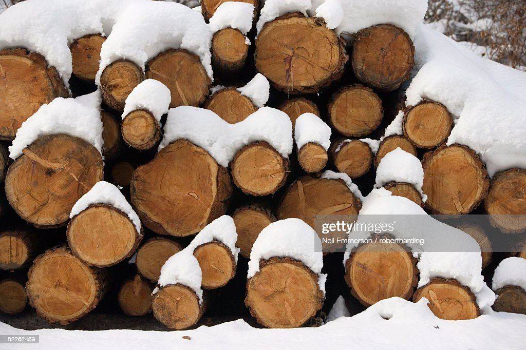 Snow covered logs : Stock Photo