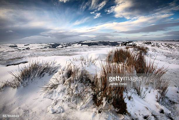 Snow covered moorland grass and rocks