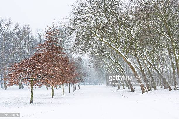 Snow Covered Path In London Park