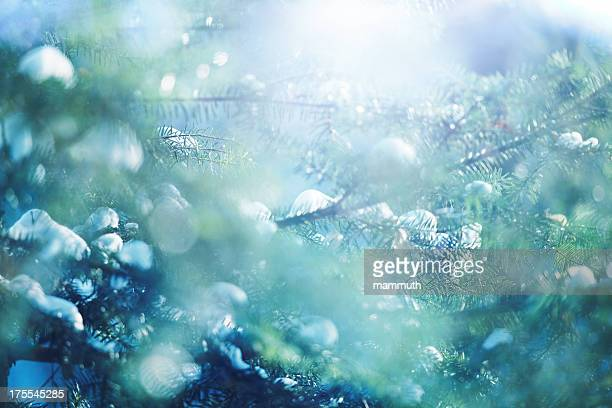 branches de pin recouverte de neige