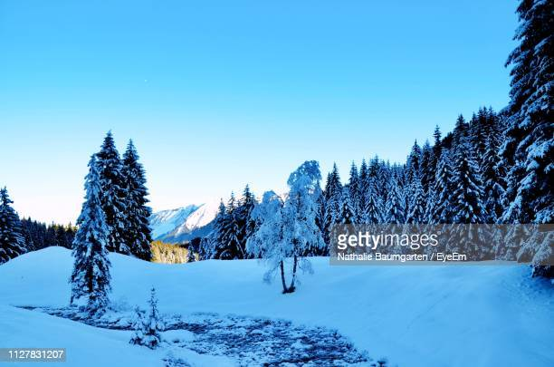 snow covered pine trees against blue sky - フォアアールベルク州 ストックフォトと画像