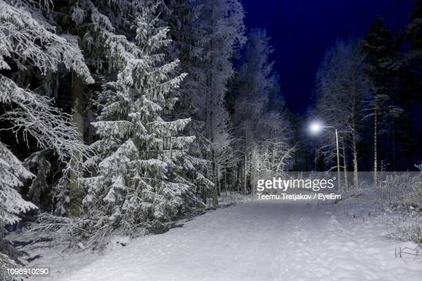 snow covered pine trees at night - teemu tretjakov stock pictures, royalty-free photos & images