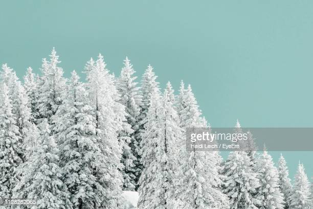snow covered pine trees in forest against sky - treetop stock pictures, royalty-free photos & images