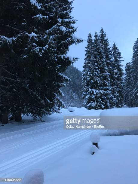 snow covered pine trees on field against sky - oskar stock pictures, royalty-free photos & images