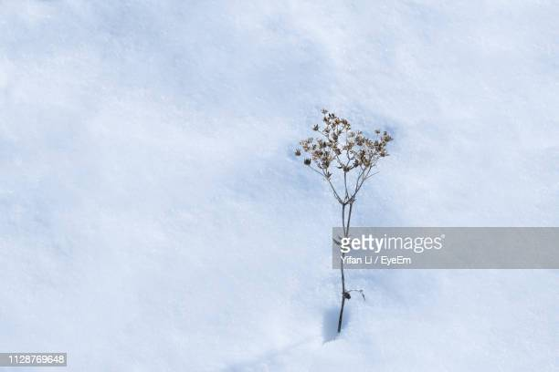 Snow Covered Plant Against Sky