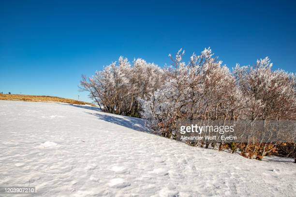 snow covered plants against clear blue sky - lorraine smothers stock pictures, royalty-free photos & images