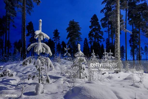 snow covered plants and trees on field - teemu tretjakov stock pictures, royalty-free photos & images