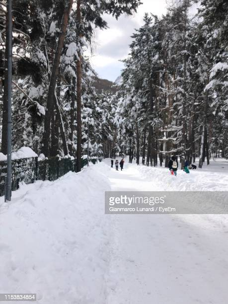 snow covered road along trees in forest - バルドネキア ストックフォトと画像