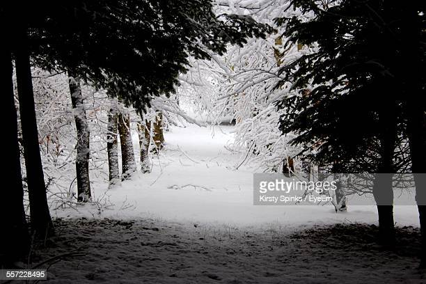 Snow Covered Road Amidst Trees