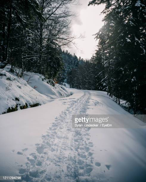 snow covered road by trees against sky - lorraine smothers stock pictures, royalty-free photos & images
