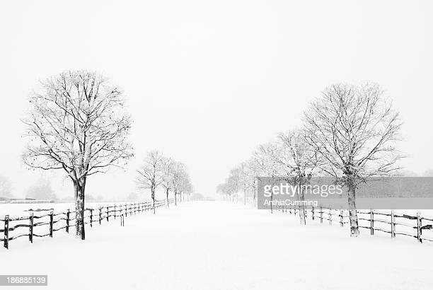 Snow covered road lined with trees and wooden fence