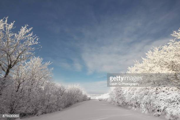 snow covered road - bare tree stock pictures, royalty-free photos & images