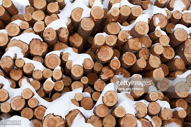 Snow covered sawn logs